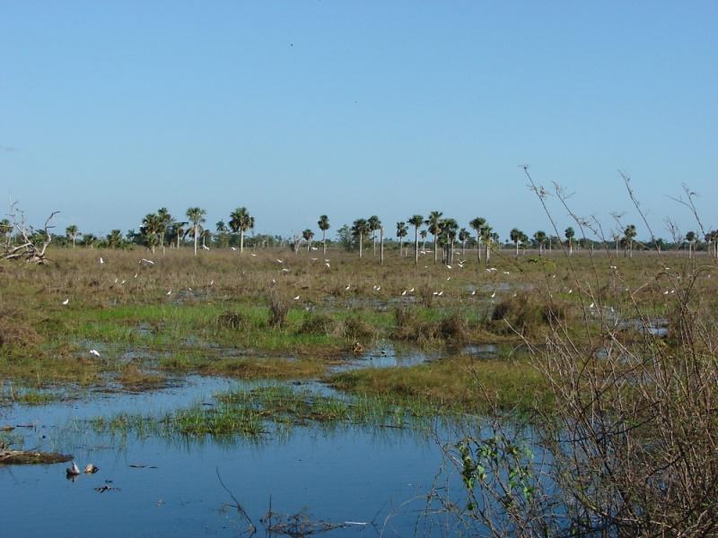 mokřad poblíž Playa Larga - foto: J. Vaněk