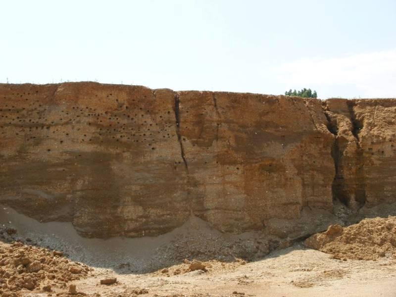 Kolonie břehulí - pískovna Turov. Foto - Romana Žaloudková