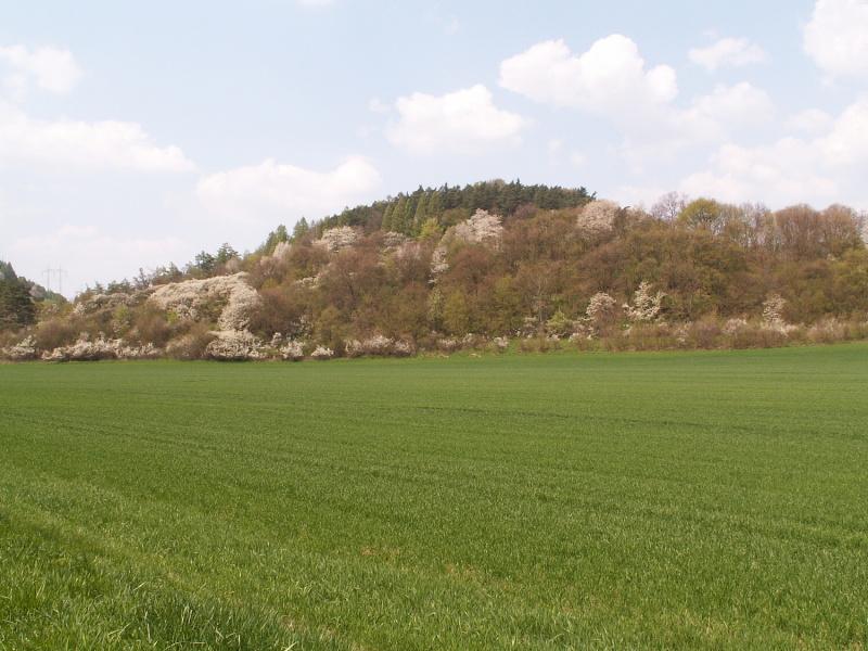 20090818_b.jpg