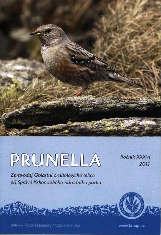 prunella1