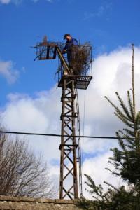 Obnova hnízda ve Veselici v dubnu 2010. Foto T. Diviš