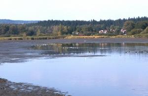 Dolní rybník po výlovu. Foto J. Mach