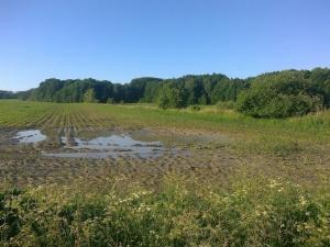 Polní mokřady v jižní a západní části Proudnického rybníka. Hnízdiště čejky chocholaté a kulíka říčního. foto L. Kadava
