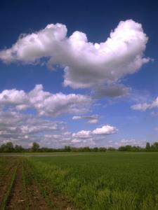 Zemědělská krajina je stanovištěm volavek popelavých v průběhu celého roku. foto L. Kadava