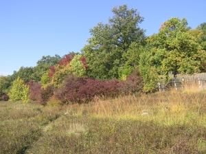 Jižně exponované stepní stráně mezi oborou a Žehuňským rybníkem. Foto L. Urbánek