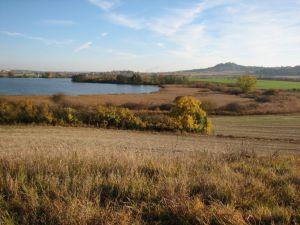 Rákosiny Ostruženského rybníka. Foto V. Šoltys