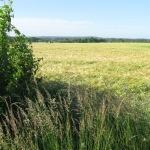 Hnízdní lokalita motáků lužních u Babic (kv. 5859) v roce 2009. Foto L. Kadava