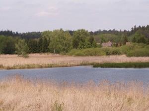 Pohled na zadní část Dolního rybníka. Foto J. Mach