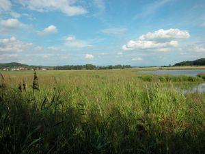 Mokřad Rzy, pohled ze západní hráze. Foto V. Vrána